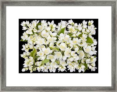 Buttonhole From White  Jasmine Flowers Framed Print by Aleksandr Volkov