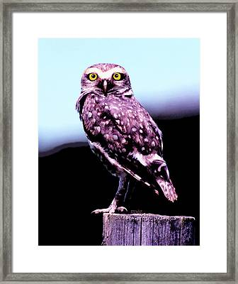 Framed Print featuring the painting Burrowing Owl by Marian Cates