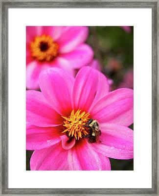 Buzz Framed Print