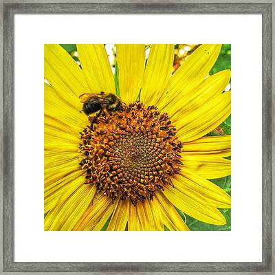 Buzz Word-sunflower Framed Print