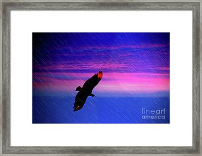 Buzzard In The Rain Framed Print by Al Bourassa