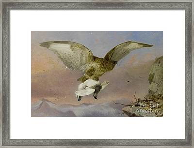 Buzzard With Ptarmigan  Framed Print
