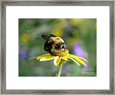Buzzing By Framed Print by Christy Ricafrente