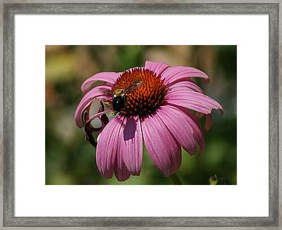 Framed Print featuring the photograph Buzzing by Rick Friedle