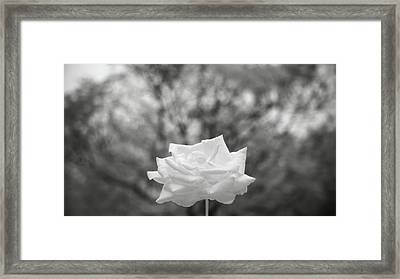 Bw 045 Framed Print by Kam Chuen Dung