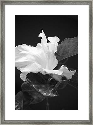 Bw Hibiscus Framed Print