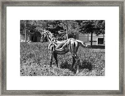 Bw Of Hope The Colt Sculpture Made Of Driftwood By Heather Jansch. Framed Print