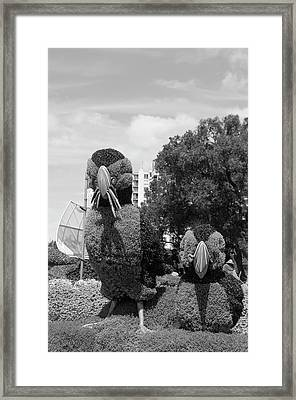 Bw Of Newfoundland And Labrador Entry The Puffins 2 Framed Print