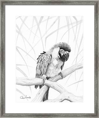 Bw Parrot Framed Print by Phyllis Howard