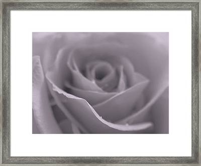 Bw Rose  Framed Print by Juergen Roth