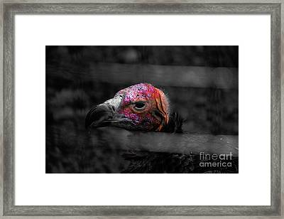 Bw Vulture - Wildlife Framed Print