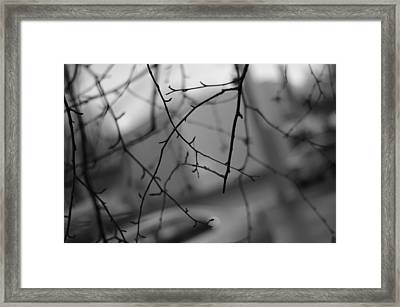 Abstract Twigs Framed Print by Marilyn Wilson