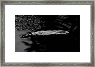 Feather Floating On A Still Pond - Bw Framed Print by Marilyn Wilson