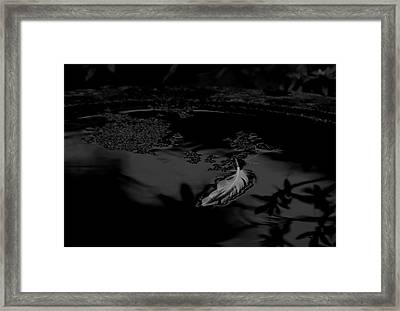 Becoming Weightless - Bw Framed Print by Marilyn Wilson