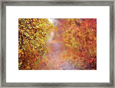By Autumn Path Framed Print
