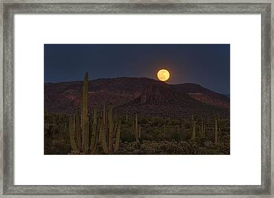 By The Light Of The Strawberry Moon  Framed Print