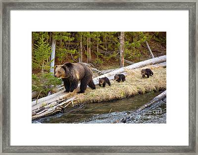 By The River Framed Print by Aaron Whittemore