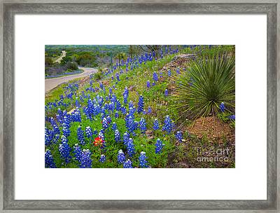 Hill Country Yucca Framed Print by Inge Johnsson