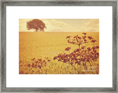 Framed Print featuring the photograph By The Side Of The Wheat Field by Lyn Randle