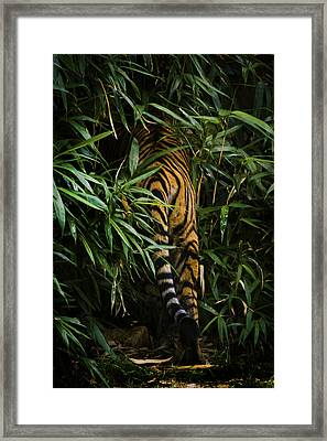 Framed Print featuring the photograph Bye by Cheri McEachin