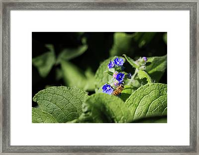 Framed Print featuring the photograph Bzzz... by Helga Novelli