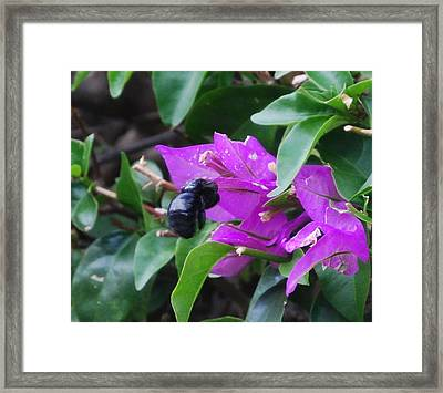 Bzzzz Framed Print by Lakida Mcnair