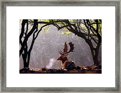 C-c-c-cold Breath - Fallow Deer Buck Framed Print by Roeselien Raimond