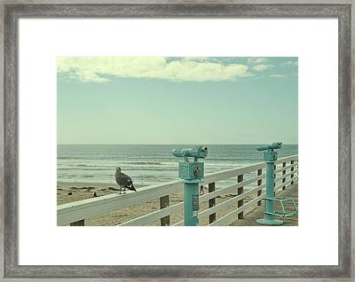 Ca Peepers Framed Print by JAMART Photography