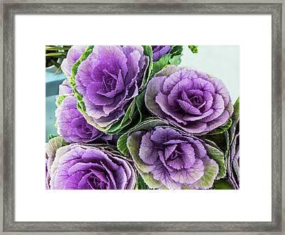 Cabbage Flower Framed Print