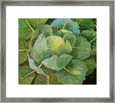 Cabbage Framed Print by Jennifer Abbot