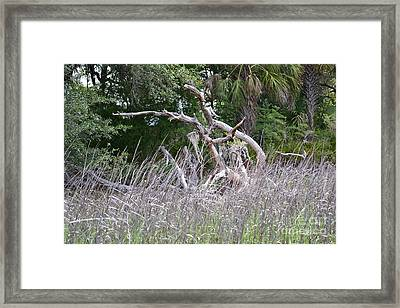 Framed Print featuring the photograph Cabbage Palms And Driftwood by Carol  Bradley