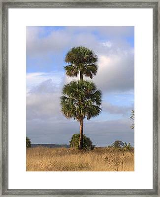 Framed Print featuring the photograph Cabbage Palms by Peg Urban