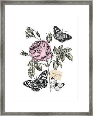 Cabbage Rose Framed Print by Stephanie Davies
