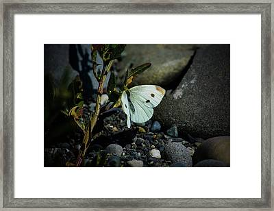 Framed Print featuring the photograph Cabbage White Butterfly by Tikvah's Hope