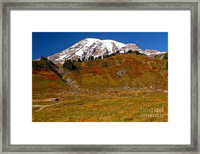 Cabin In Paradise Framed Print by Adam Jewell