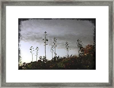 Cabo Weeds Framed Print