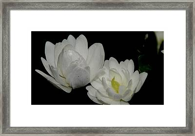 Cacasus Framed Print by Patrick  Short