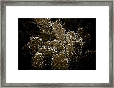 Cactaceae Framed Print by Frank Tschakert