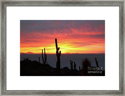Cacti And Fiery Sunset Over Salar De Uyuni Bolivia Framed Print by James Brunker