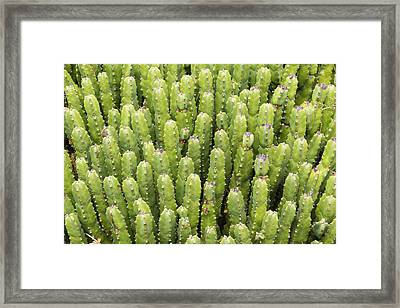 Framed Print featuring the photograph Cacti by Josef Pittner