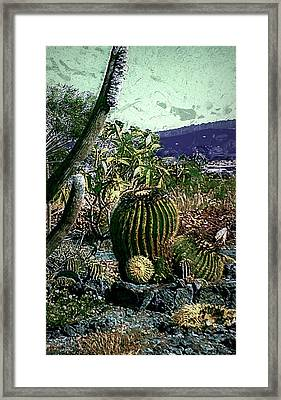 Framed Print featuring the photograph Cacti by Lori Seaman