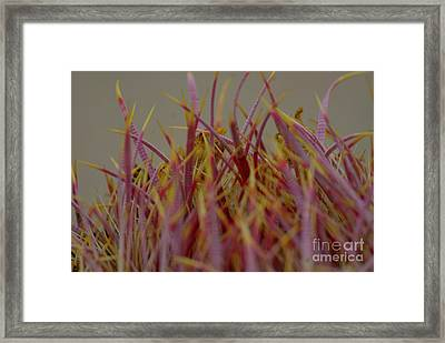 Framed Print featuring the photograph Cacti by Rod Wiens