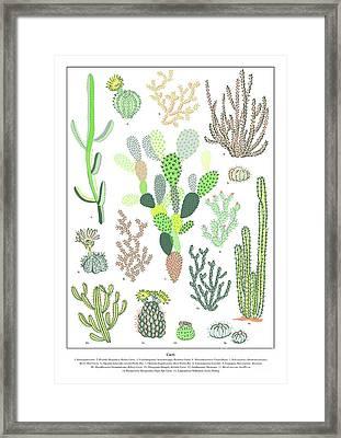 Cacti Varieties Framed Print