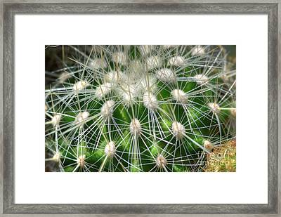 Framed Print featuring the photograph Cactus 1 by Jim and Emily Bush