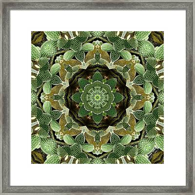 Cactus 1361k8 Framed Print by Brian Gryphon