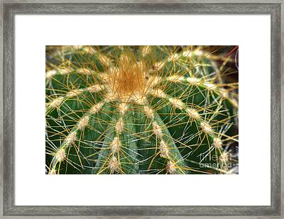 Framed Print featuring the photograph Cactus 2 by Jim and Emily Bush