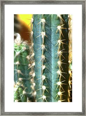 Framed Print featuring the photograph Cactus 3 by Jim and Emily Bush