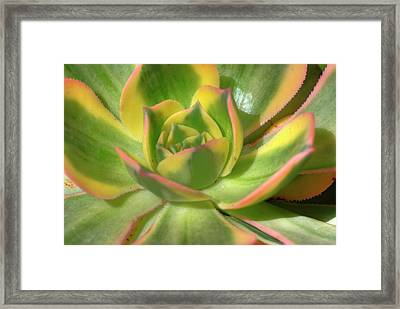 Framed Print featuring the photograph Cactus 4 by Jim and Emily Bush
