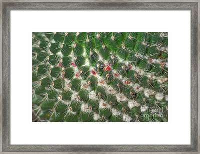 Framed Print featuring the photograph Cactus 5 by Jim and Emily Bush