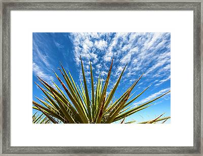 Cactus And Blue Sky Framed Print